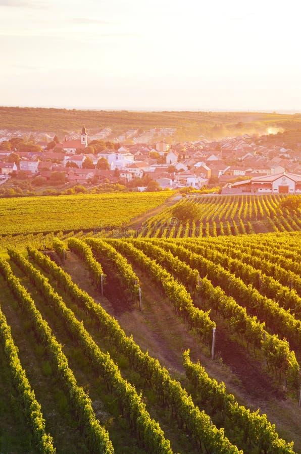 Imagen vertical que captura viñedos hermosos cerca del pueblo pintoresco Velke Pavlovice en Moravia meridional, Czechia fotos de archivo libres de regalías