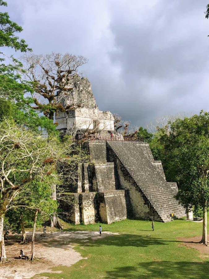 Imagens das ruínas de Tikal, ruínas maias antigas nas florestas úmidas da Guatemala do norte fotografia de stock royalty free