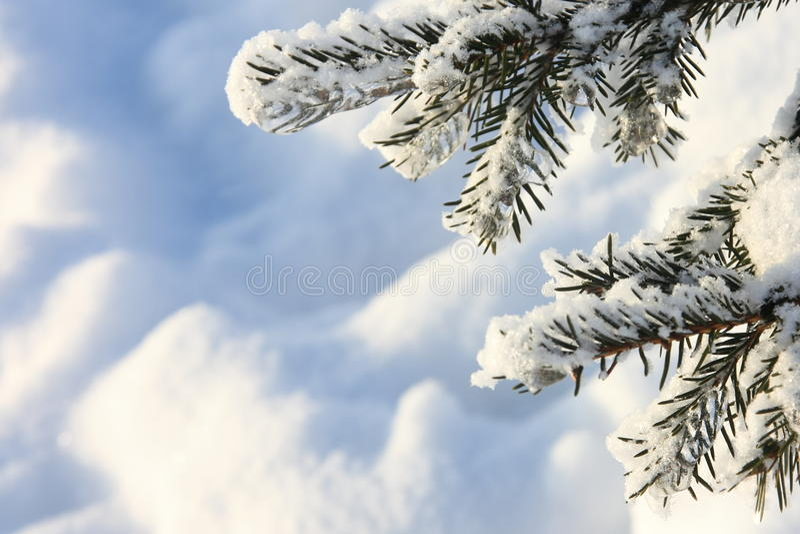 Imagens do inverno: Árvore coberto de neve - fotos conservadas em estoque imagens de stock royalty free