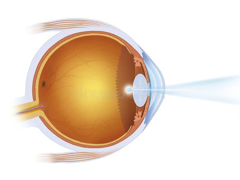 Tratamento do laser no olho ilustração royalty free