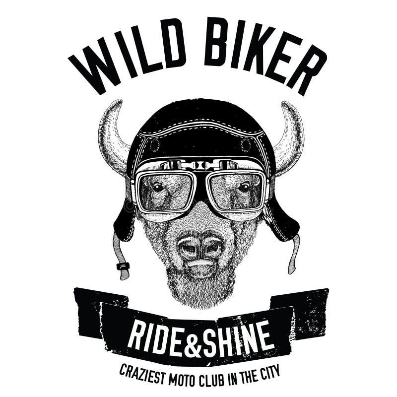 Imagens do vintage do búfalo, bisonte, boi para o projeto do t-shirt para a motocicleta, bicicleta, velomotor, clube do 'trotinet ilustração royalty free