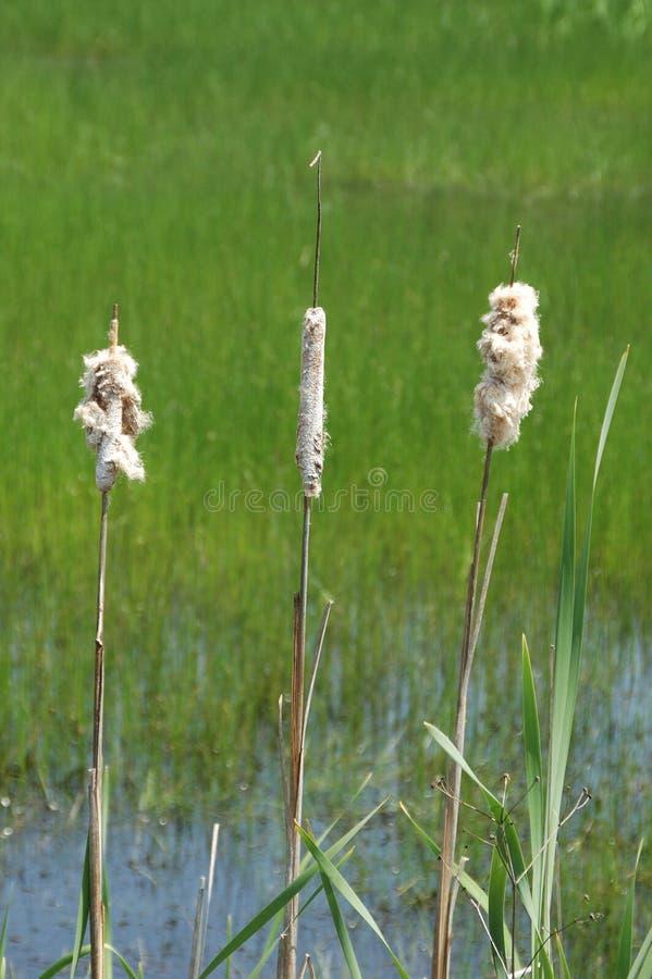 Imagens em torno de uma lagoa imagem de stock