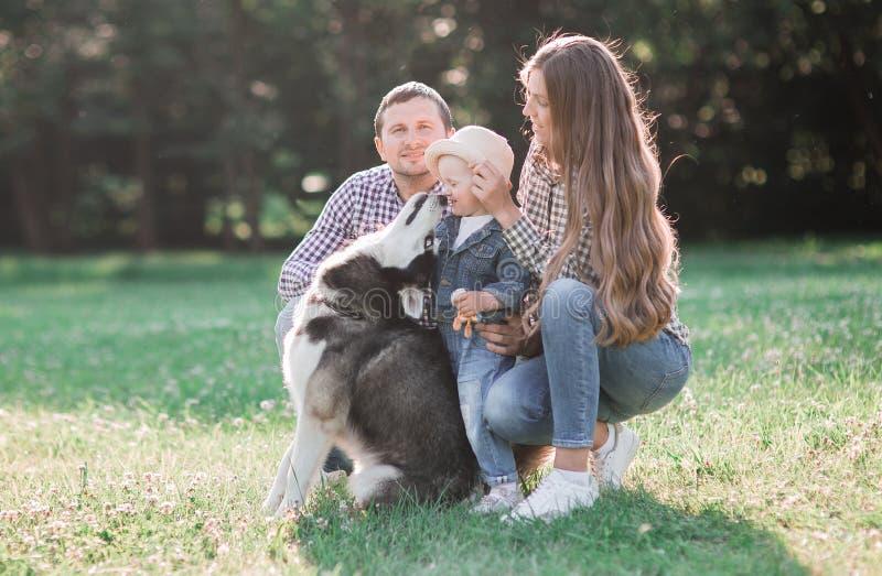 imagens ensolaradas de um casal feliz com um cão e uma criança foto de stock royalty free