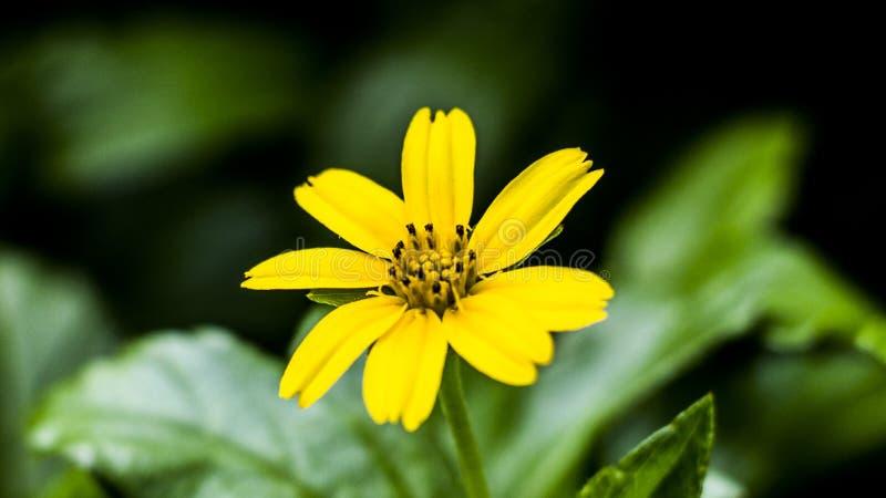 Imagens macro das flores imagens de stock royalty free