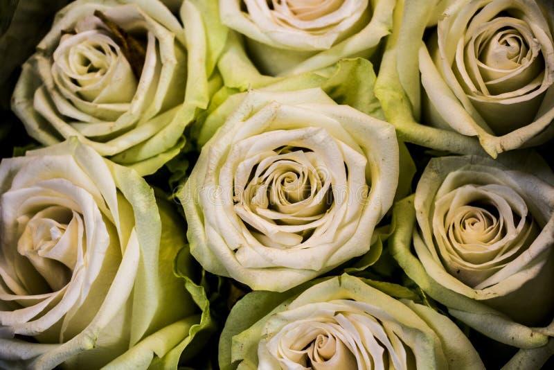 Imagens macro das flores fotografia de stock royalty free