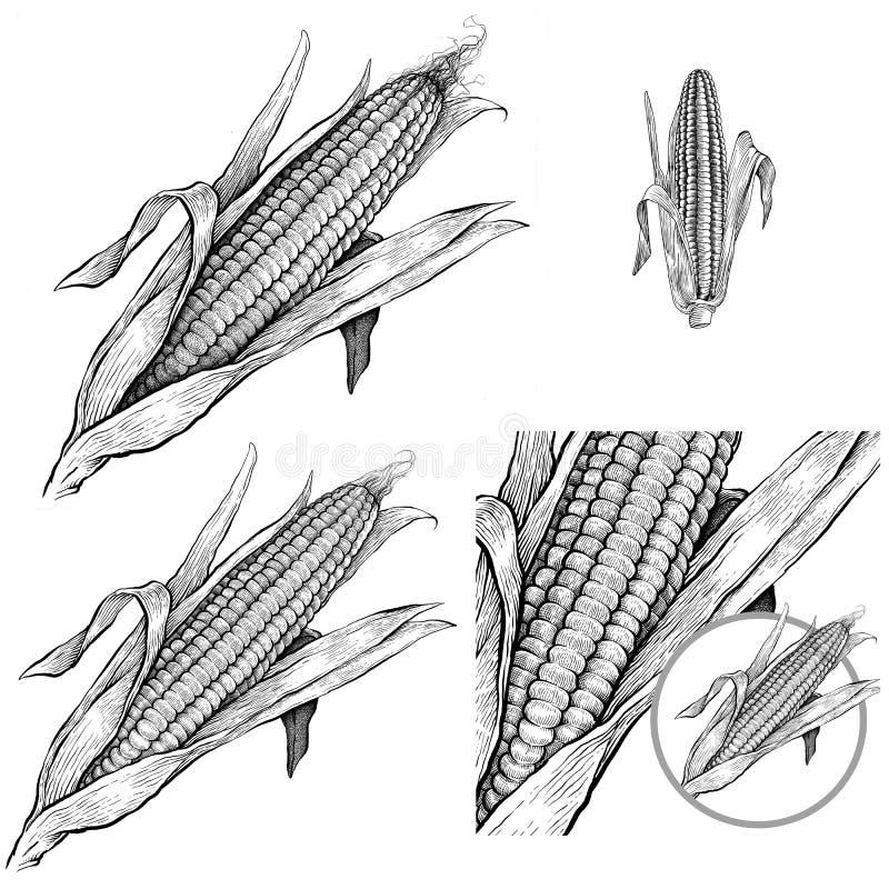 Imagens monocromáticas do milho ou da pipoca de doces com fundo branco ilustração stock