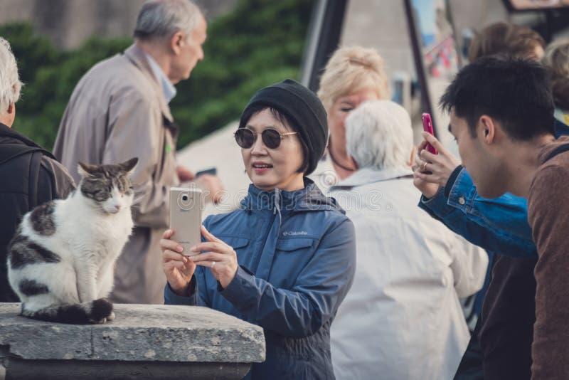 Images de prise de touristes d'un chat photographie stock