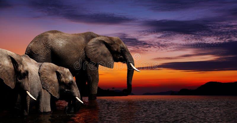 Imagination d'éléphant photographie stock
