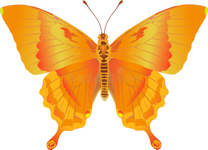 Imagination d'incendie de Papilio illustration stock