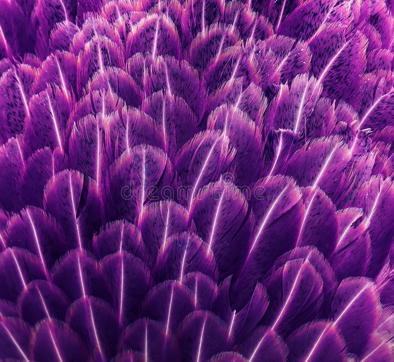 imaginative background of beautiful feathers in lilac stock photos