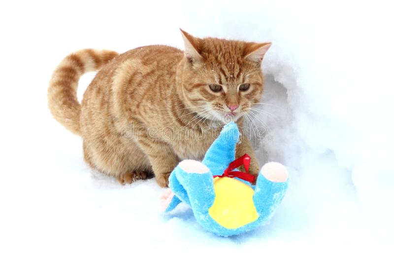 Imbirowa figlarka bawić się z pluszową zabawką w śniegu obrazy stock