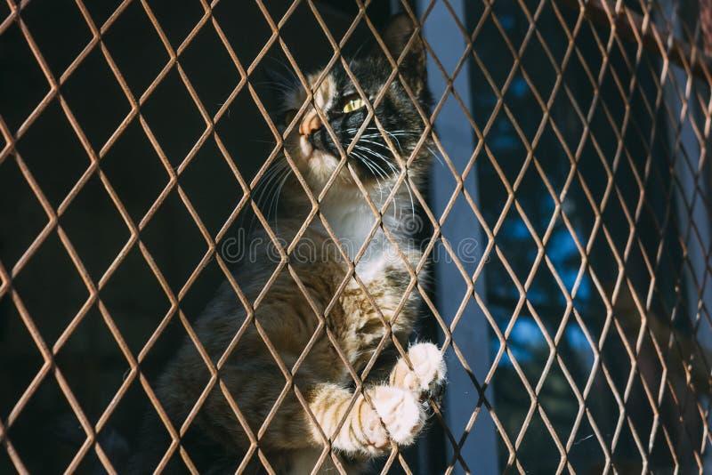 Imbirowego i czarnego kota oklepiec i wtyka w stalowym drucianym siatkarstwie, c fotografia stock