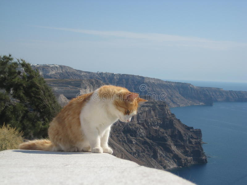 Imbirowy i biały kot osiąga szczyt nad ścianą w Santorini, Grecja fotografia royalty free