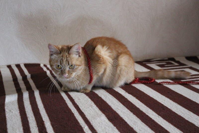 Imbirowy kot kłama na leżance z zielonymi oczami obraz royalty free