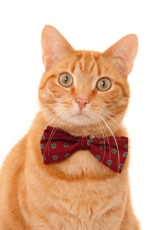 Imbirowy kot z łęku krawatem obrazy royalty free
