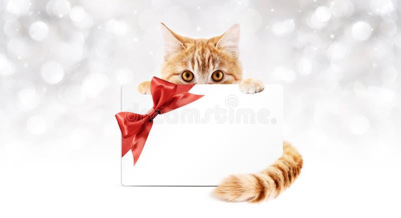 Imbirowy kot z prezent kartą i tasiemkowym łękiem royalty ilustracja