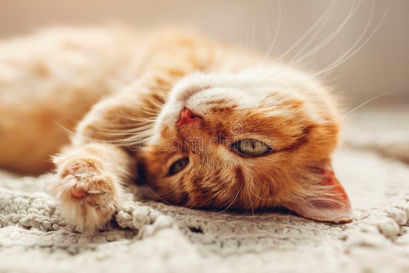Imbirowy kota lying on the beach na podłogowym dywaniku do góry nogami Zwierzę domowe relaksuje w domu i czuje wygodny zdjęcie stock