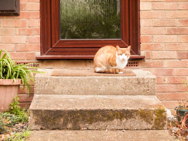 Imbirowy kota obsiadanie na dzwi wejściowy kroka czekaniu zdjęcie royalty free