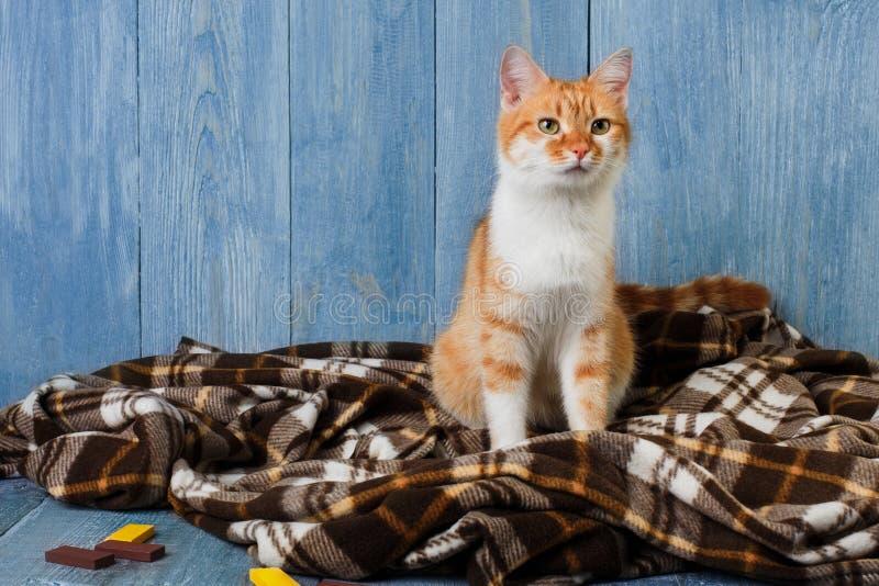 Imbirowy kota obsiadanie na szkockiej kraty koc zdjęcie stock