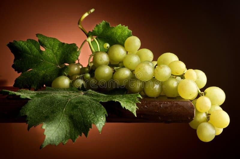 Imbroglione bicchiere di vino di Uva fotografia stock
