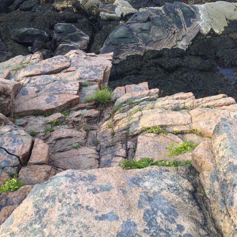 IMG_2969 Acadia parka narodowego ©2018 Paul światło zdjęcie stock
