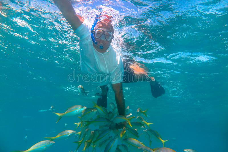 Varadero, Cuba: man snorkeling and playing with a fish school royalty free stock images