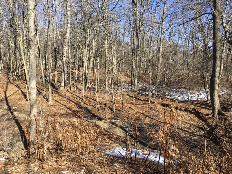 IMG_3544 Lexington, MA. Sunlit wooded area in New England royalty free stock photo