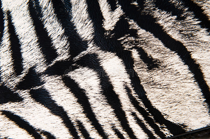 Download Imitation of tiger leather stock photo. Image of hunting - 14218932