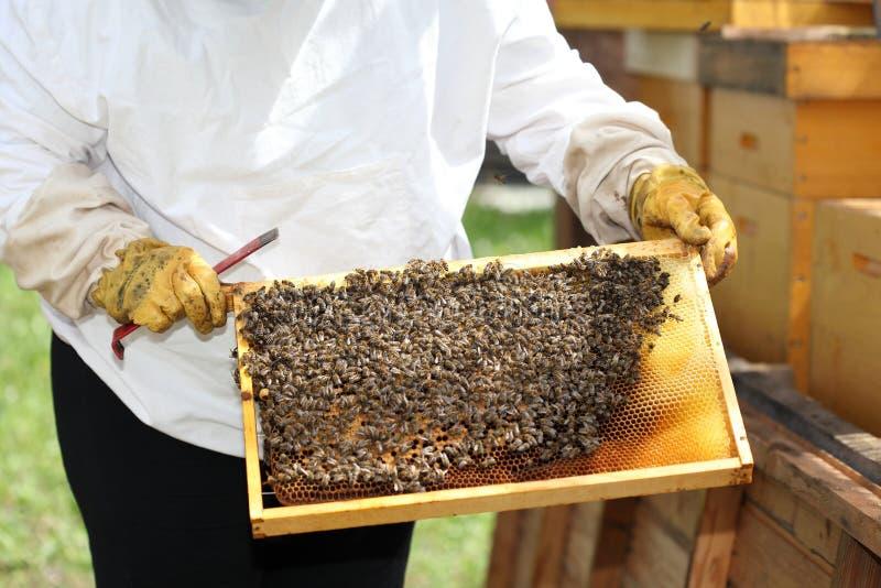 Imker überprüft einen Bienenstock stockbilder