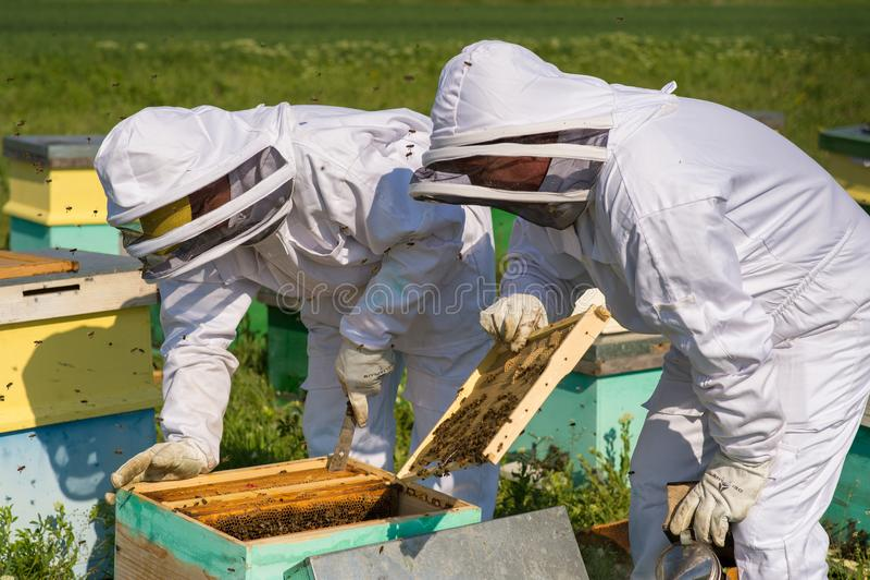 Imker aan het werk tijdens de lentetijd door kostuum wordt beschermd dat royalty-vrije stock afbeelding