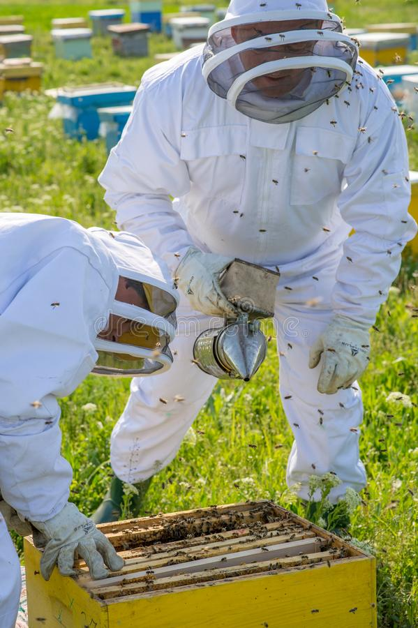 Imker aan het werk tijdens de lentetijd door kostuum wordt beschermd dat stock fotografie