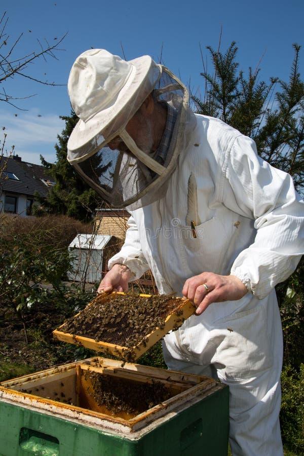 Imker, der für Bienenvolk sich interessiert lizenzfreies stockbild