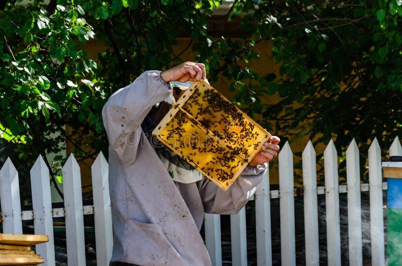 Imker, der honeycoms auf Bienenhaus überprüft lizenzfreie stockfotos