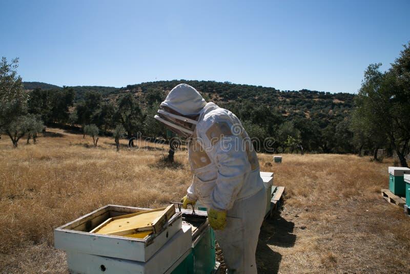Imker die aan bijenkorven werken royalty-vrije stock afbeeldingen