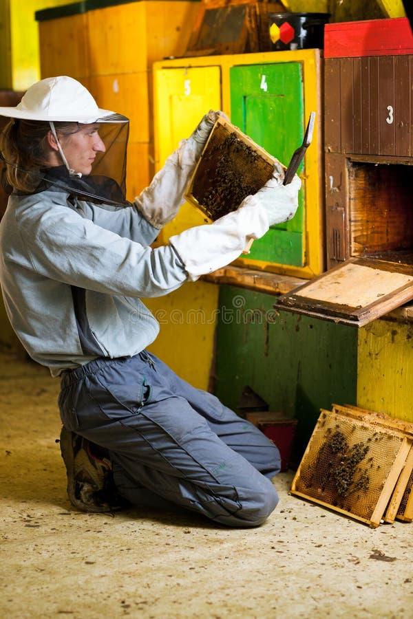 Imker die in een bijenstal werkt stock foto