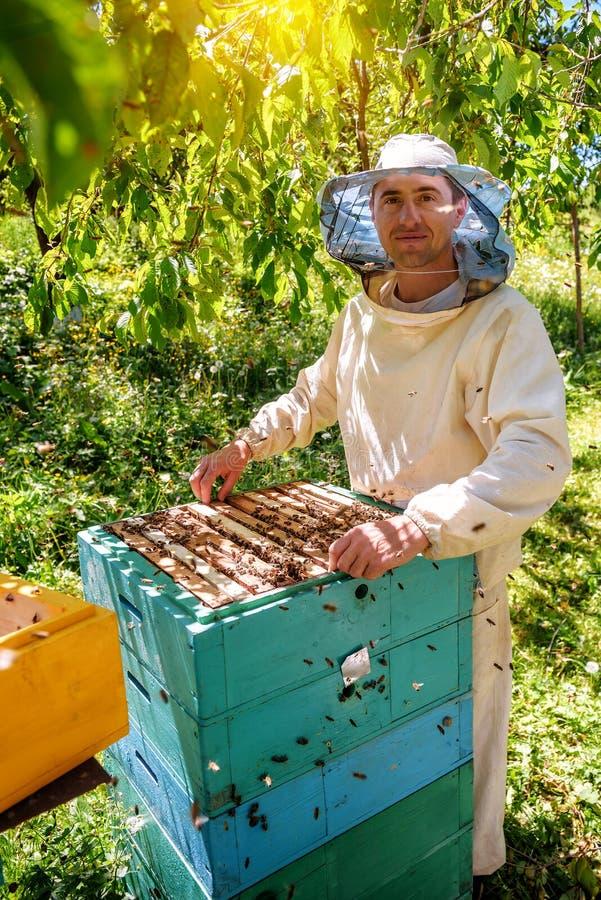 Imker die een honingraathoogtepunt van bijen houden Imker Inspecting Honeycomb Frame bij Bijenstal stock afbeelding