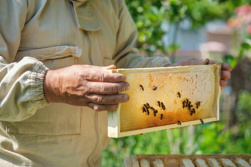 Imker die een honingraathoogtepunt van bijen houden Imker Inspecting Honeycomb Frame bij Bijenstal Verse honing stock foto