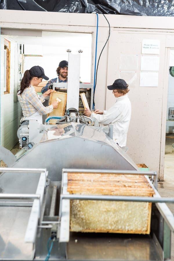 Imker, die Honey From Machine In extrahieren lizenzfreie stockfotografie