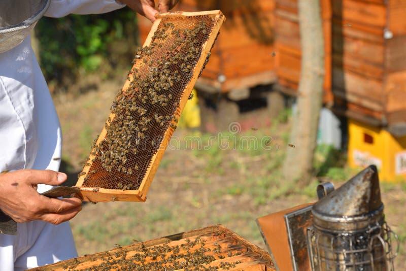Imker die houten kader van honingraat houden royalty-vrije stock afbeelding