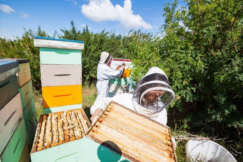 Imker, die im Bienenhaus arbeiten stockbild