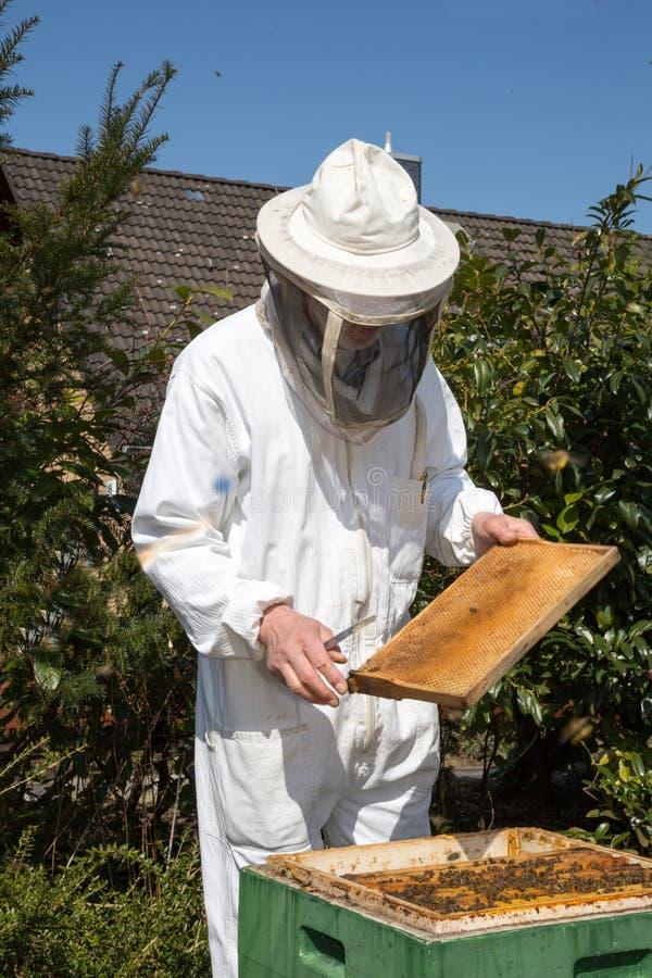 Imker die voor bijenkolonie geven stock foto's