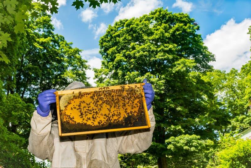 Imker die zijn bijenkorf inspecteren stock afbeelding