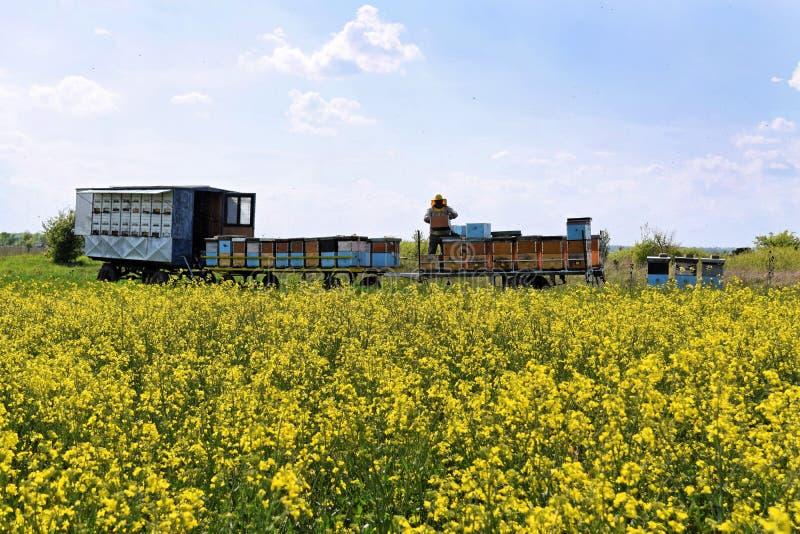 Imker en zijn mobiele bijenkorven stock afbeeldingen