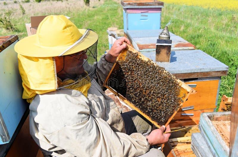 Imker en zijn mobiele bijenkorven royalty-vrije stock afbeeldingen