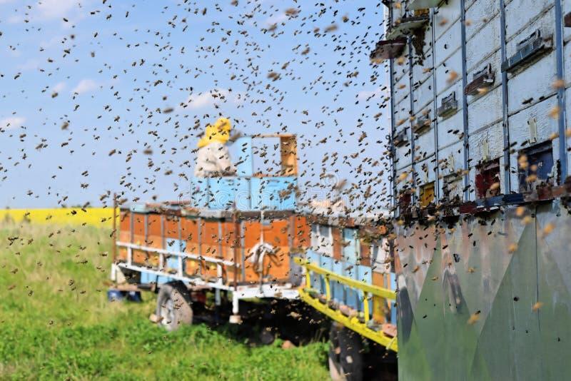 Imker en zijn mobiele bijenkorven stock foto's