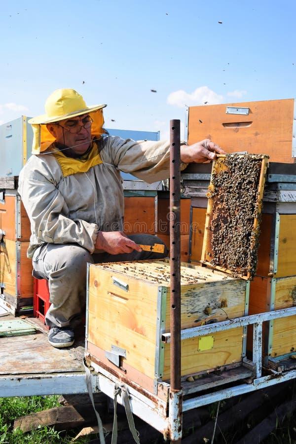 Imker en zijn mobiele bijenkorven royalty-vrije stock afbeelding