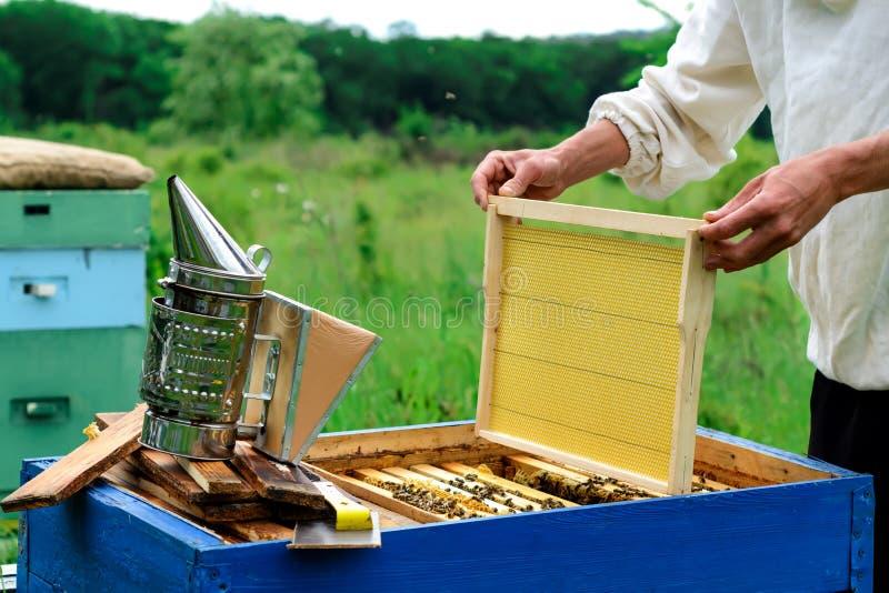 Imker Inspecting Honeycomb Frame bij Bijenstal Imkerijconcept royalty-vrije stock afbeelding