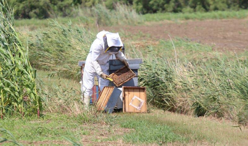 imker met beschermend kostuum tijdens het oogsten honing royalty-vrije stock foto