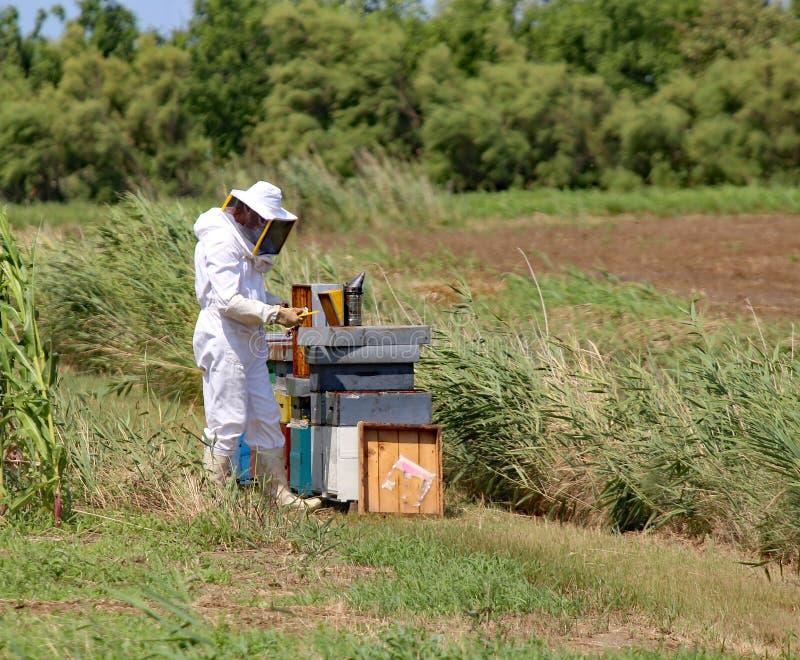 Imker met beschermende kostuum het oogsten honing en vele bijenkorven stock foto's