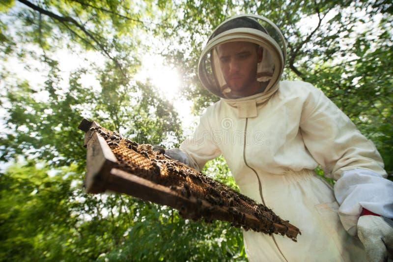 Imker met een kaderhoogtepunt van bijen royalty-vrije stock afbeelding
